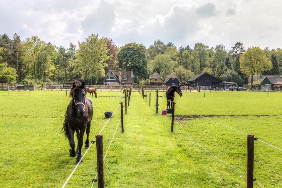 WoudStee paardenstal weidegang veluwe overnachten met paard