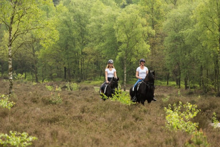 WoudStee paardenstallen paardrijden luxe vakantie op de veluwe overnachten met paard