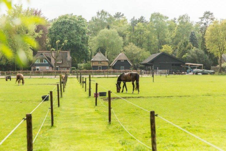 WoudStee wijdegang padock luxe vakantie op de veluwe overnachten met paard