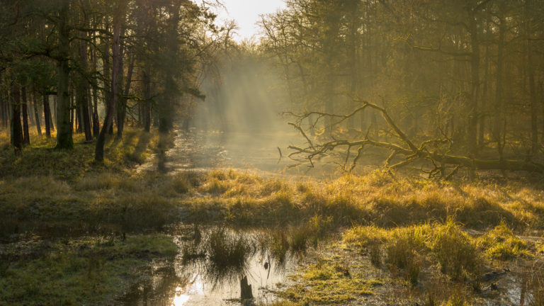 Door de bomen van de Veluwe schijnt van grote hoogte het zonlicht op het water