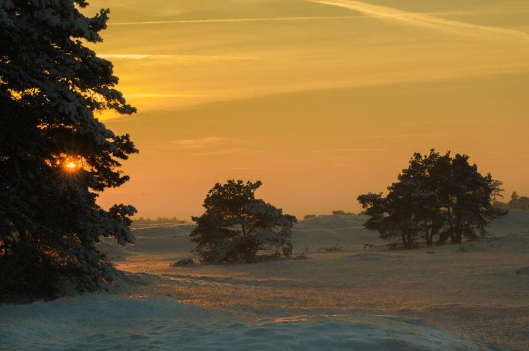 Zonsondergang op de hei van de Veluwe