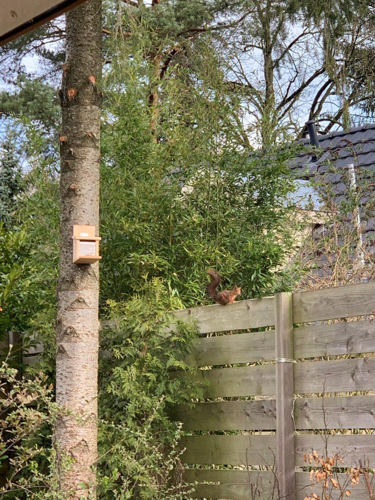 Een eekhoorntje bij WoudStee Cornelia