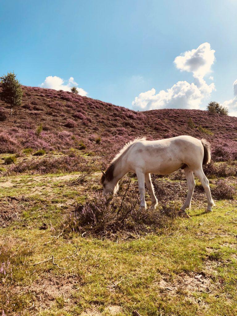 Met eigen paard op vakantie op de Veluwe
