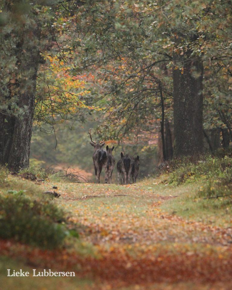Het bos in tijdens je vakantie bij WoudStee