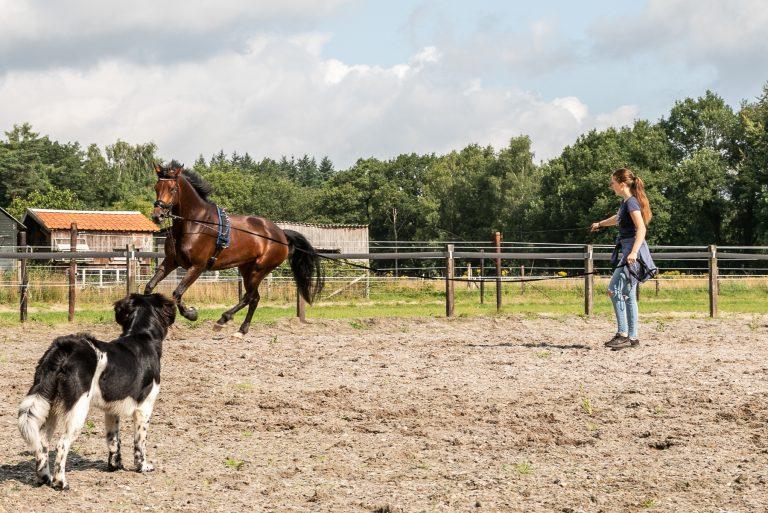 WoudStee oefenen in de bak paardrijden veluwe epe