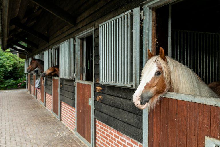 Antonia paardenstallen met paarden bij Woudstee