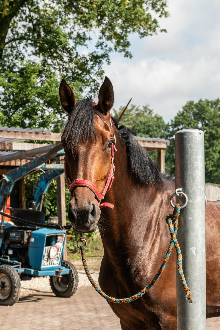 Paard bij Antonia Woudstee