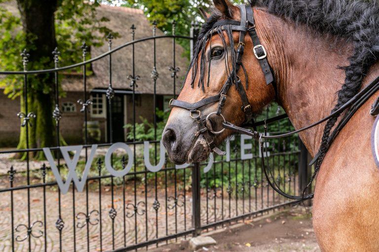 Paard bij toegangshek Antonia bij Woudstee