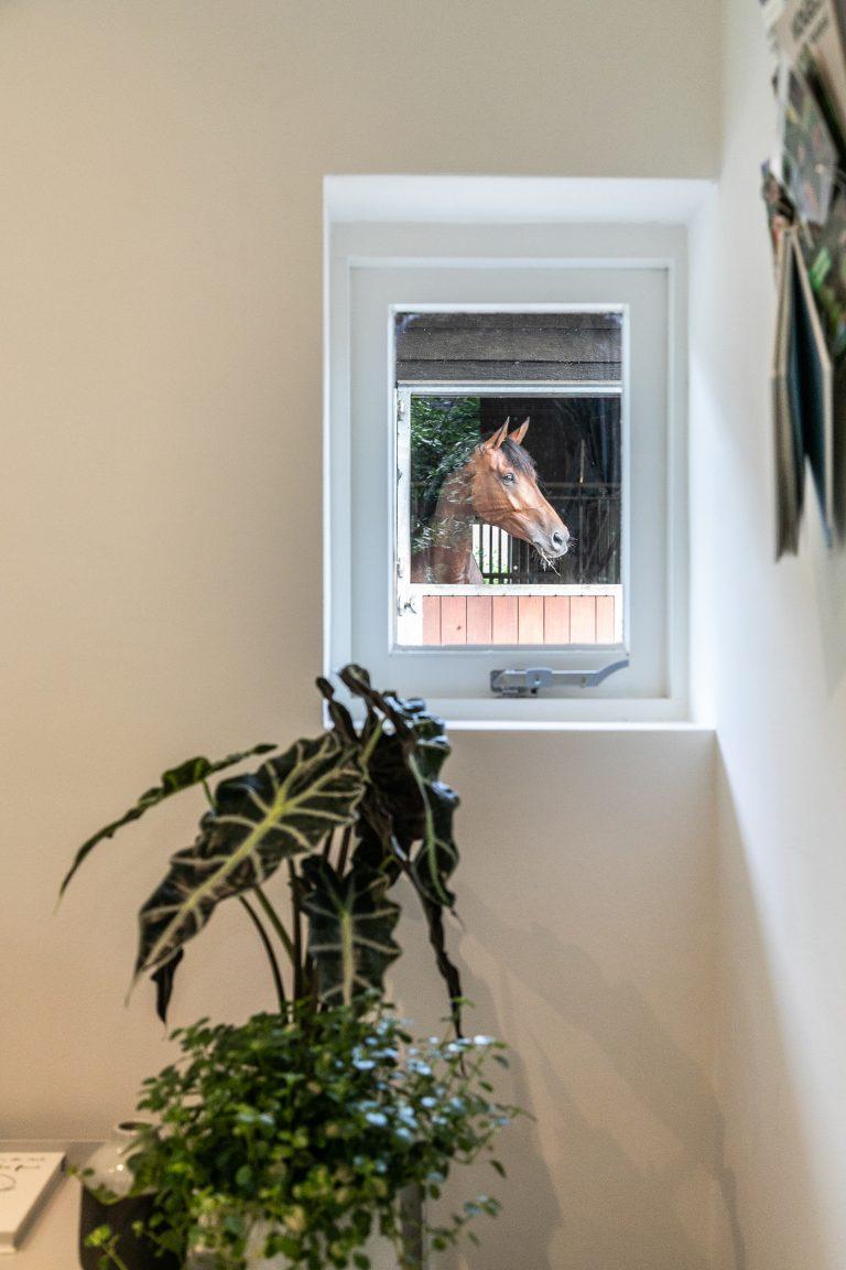 Plant bij raam met uitzicht op paardenstal Antonia bij Woudstee