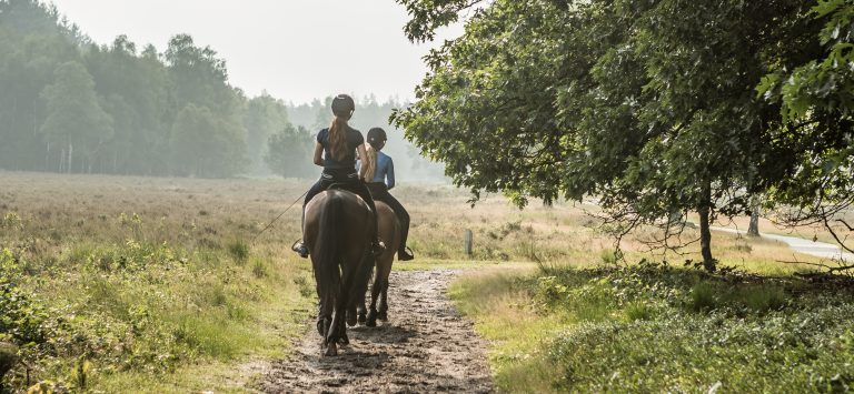 paardrijden vlakbij woudstee luxe vakantie met je paard