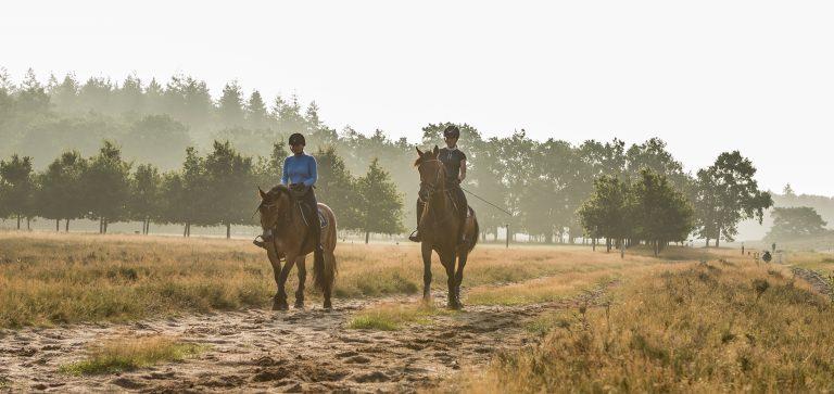 WoudStee paardrijden vakantie eigen paard veluwe