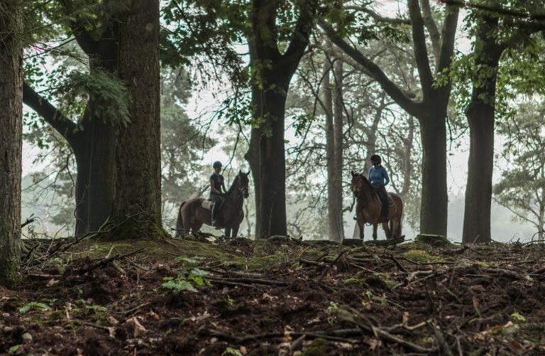 WoudStee paardrijden vakantie eigen paard veluwe epe